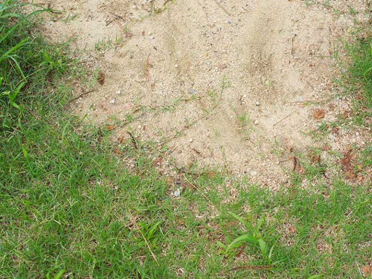 5 Of The Best Grass Seed for Sandy Soil