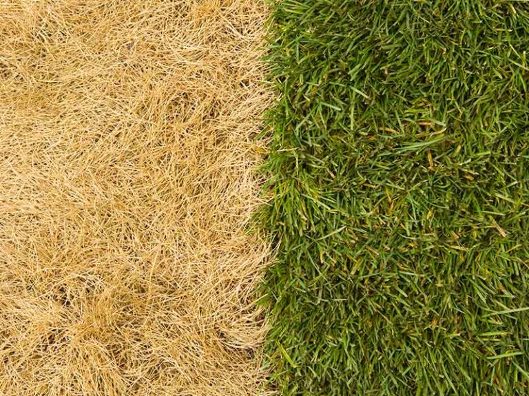 Will Bleach Kill Grass?
