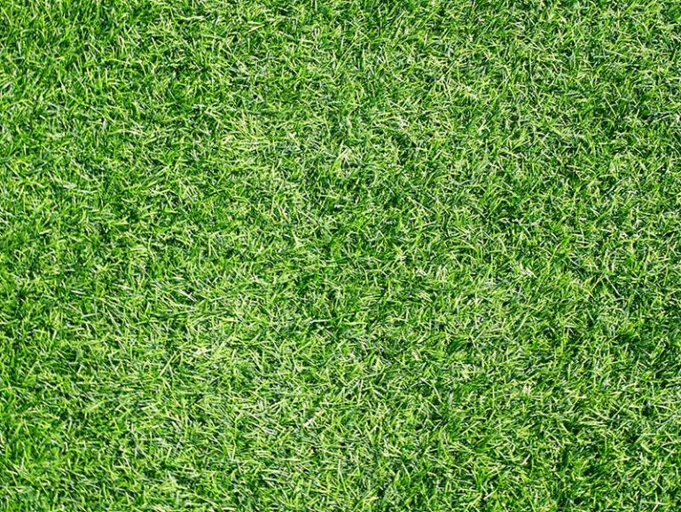 Can You Put Too Much Lime on Your Lawn? (And How To Fix It!)