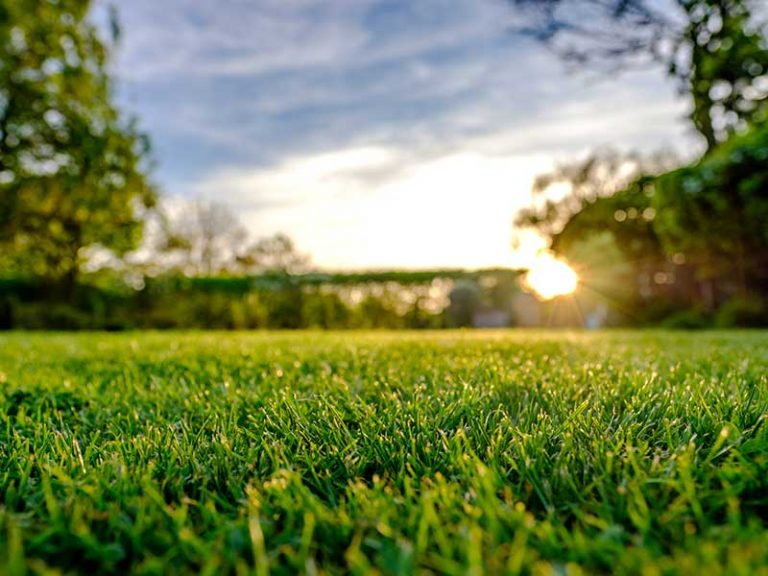 What Does Lime Do For Grass: How & When To Apply