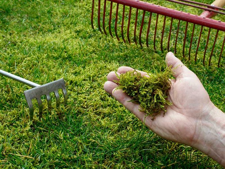 How to Get Rid of Moss in Your Lawn