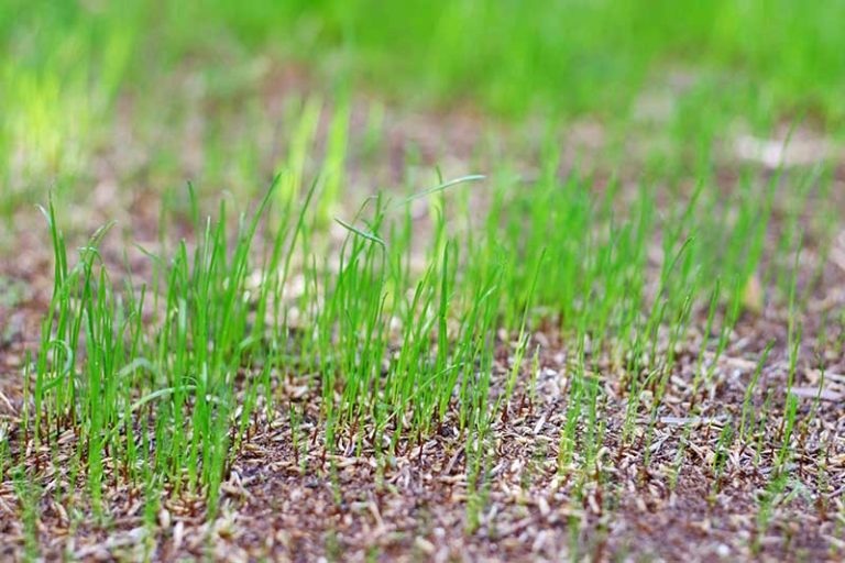 New Grass Seed Guide