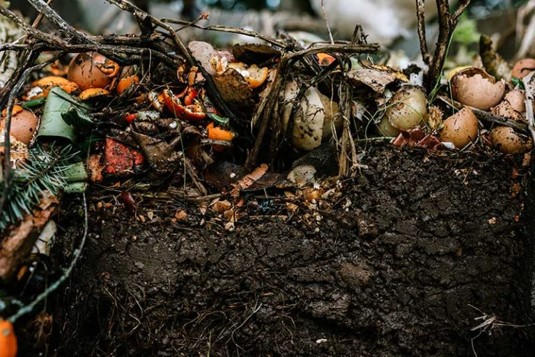 What is Organic Fertilizer?