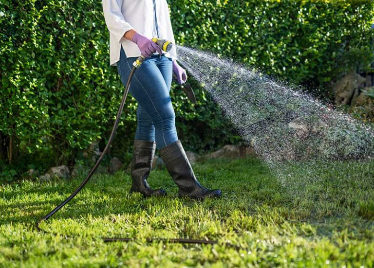 How Often to Water Grass Seed