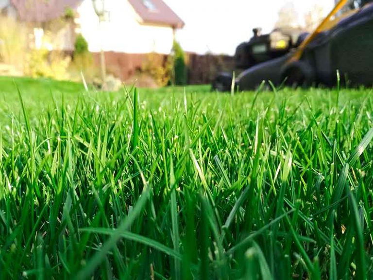 How Tall Can Grass Grow (And When To Cut Your Lawn)