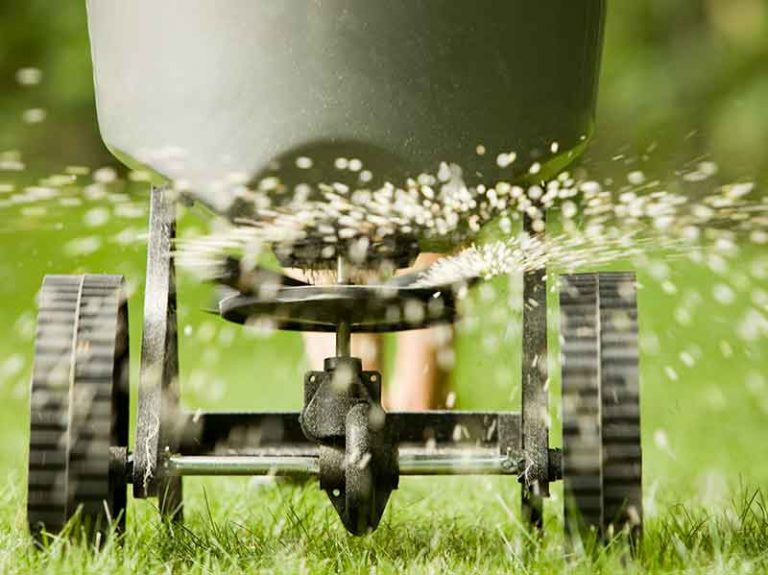 When and How Often to Fertilize Your Lawn