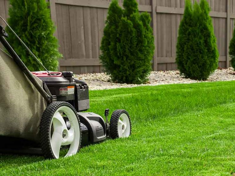 When To Mow New Sod: How Long Should You Wait?