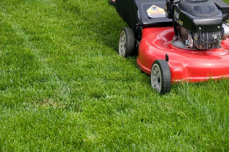How Often to Mow a Lawn