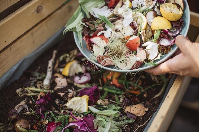 How to Compost: A Complete Guide