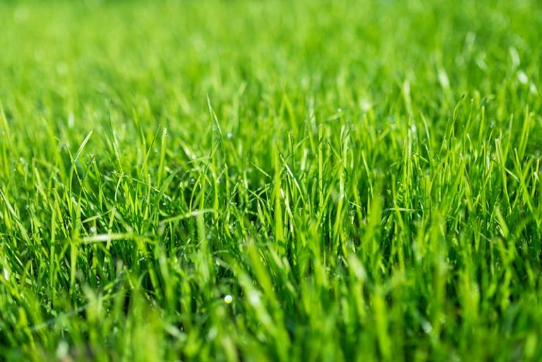 When Does Grass Stop Growing?