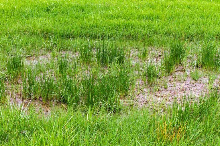Will Grass Spread to Bare Spots in Your Lawn?