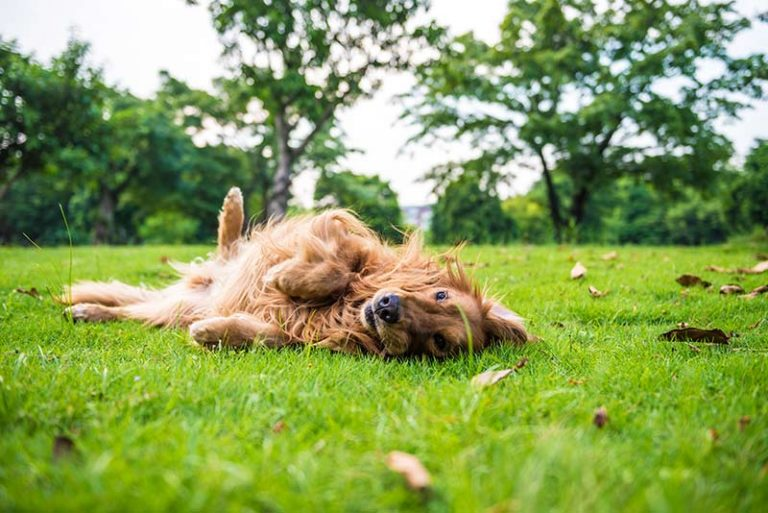 Does Lawn Lime Hurt Pets?