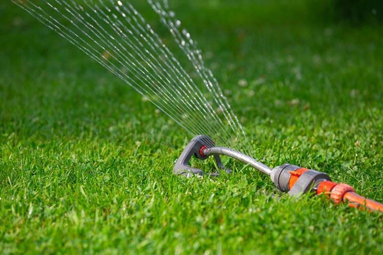 How Often to Water New Sod